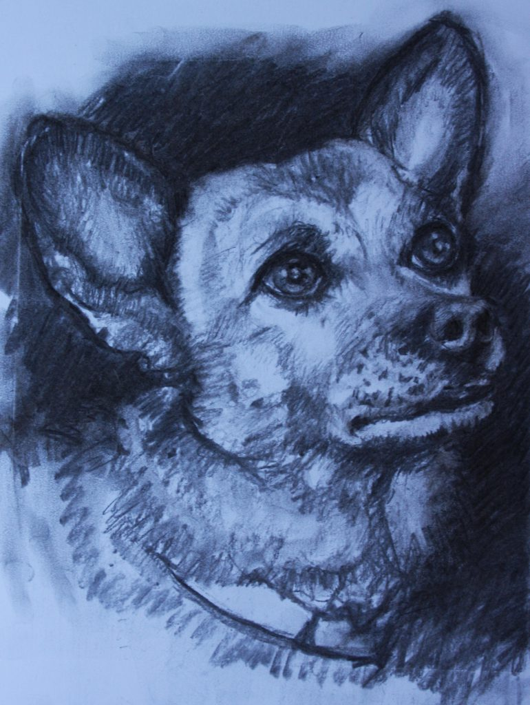charcoal portrait pet